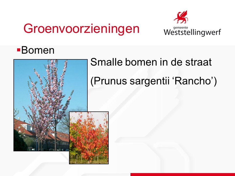 Groenvoorzieningen Smalle bomen in de straat (Prunus sargentii 'Rancho')  Bomen