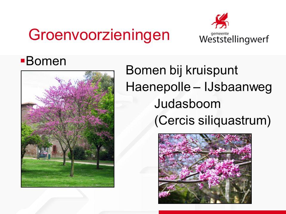 Groenvoorzieningen Bomen bij kruispunt Haenepolle – IJsbaanweg Judasboom (Cercis siliquastrum)  Bomen