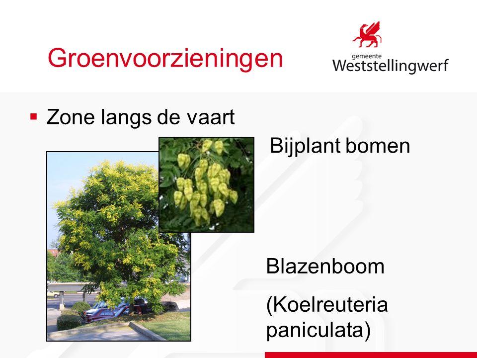 Groenvoorzieningen  Zone langs de vaart Bijplant bomen Blazenboom (Koelreuteria paniculata)