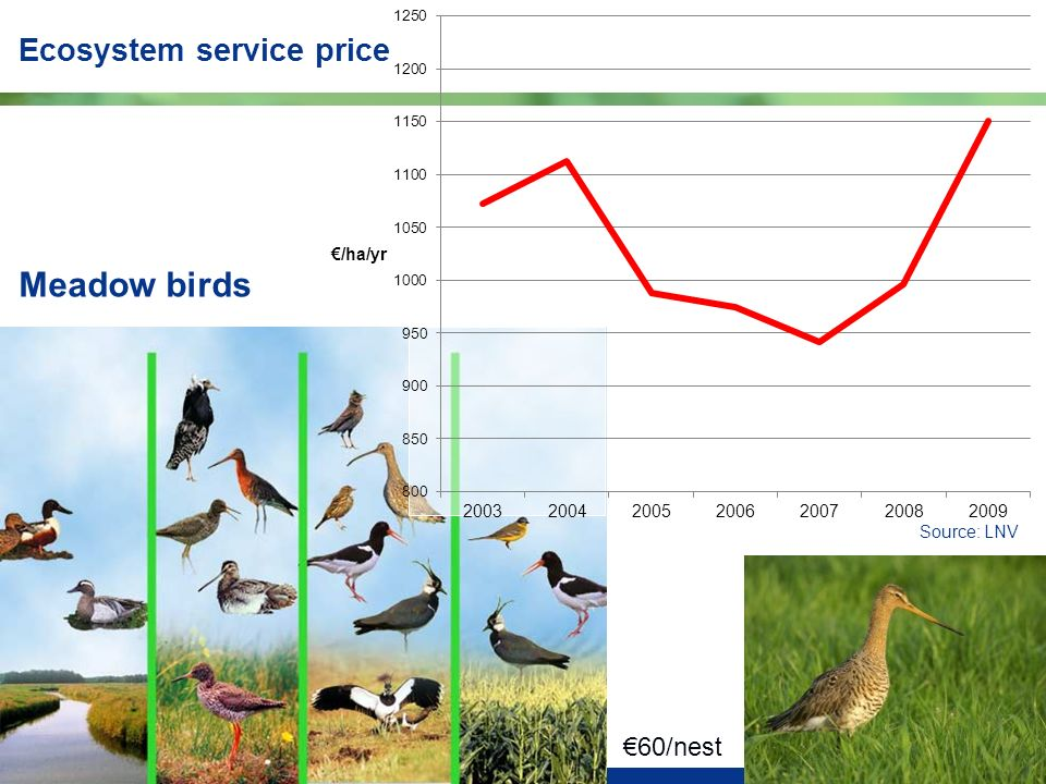 8 Meadow birds Ecosystem service price €60/nest Source: LNV