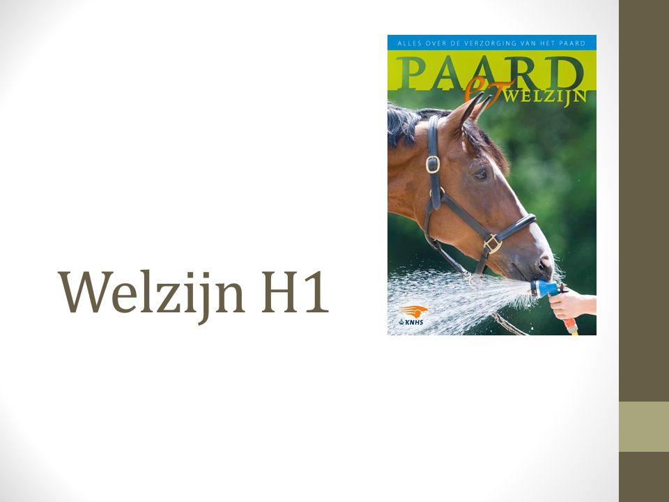 Welzijn H1