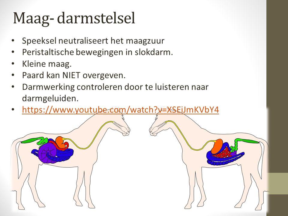 Maag- darmstelsel Speeksel neutraliseert het maagzuur Peristaltische bewegingen in slokdarm. Kleine maag. Paard kan NIET overgeven. Darmwerking contro