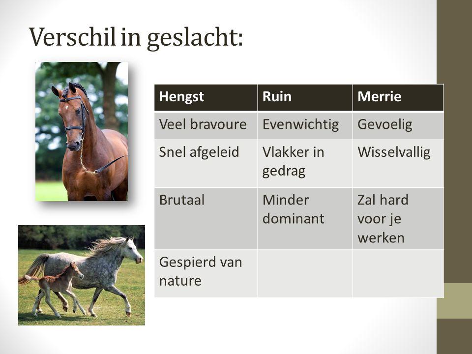 Lichaamstaal van paarden Paarden communiceren met de staart, oren, gezichtsuitdrukkingen en lichaamshouding.