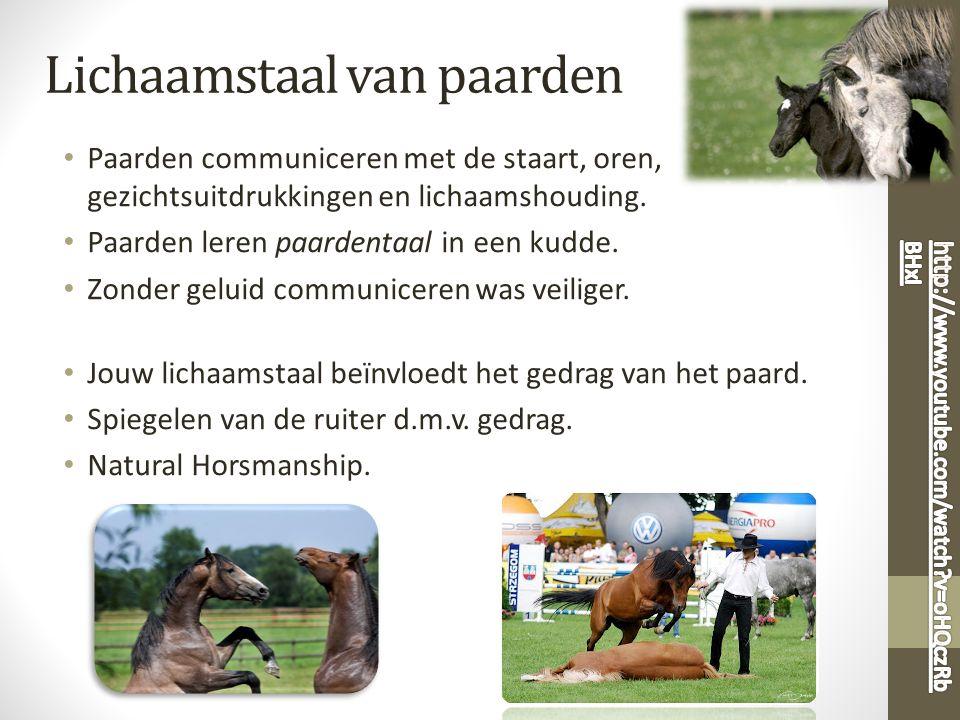 Lichaamstaal van paarden Paarden communiceren met de staart, oren, gezichtsuitdrukkingen en lichaamshouding. Paarden leren paardentaal in een kudde. Z