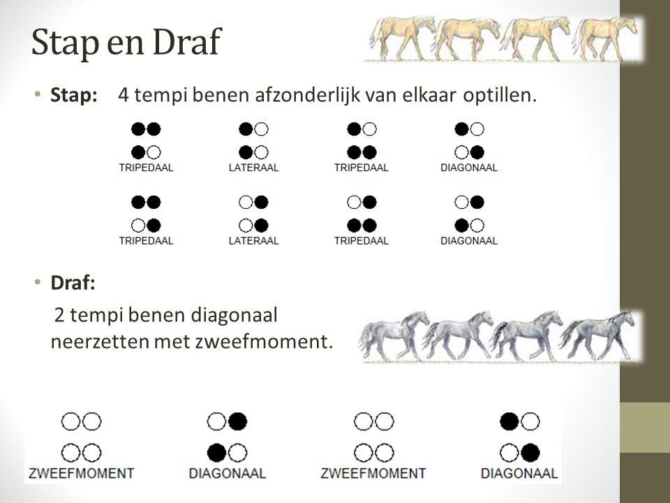 Stap en Draf Stap: 4 tempi benen afzonderlijk van elkaar optillen. Draf: 2 tempi benen diagonaal neerzetten met zweefmoment.