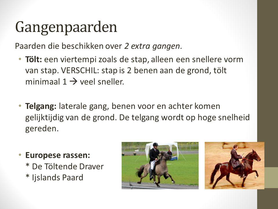 Gangenpaarden Paarden die beschikken over 2 extra gangen. Tölt: een viertempi zoals de stap, alleen een snellere vorm van stap. VERSCHIL: stap is 2 be