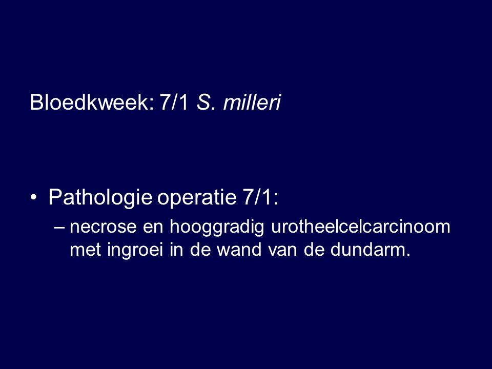 Bloedkweek: 7/1 S.