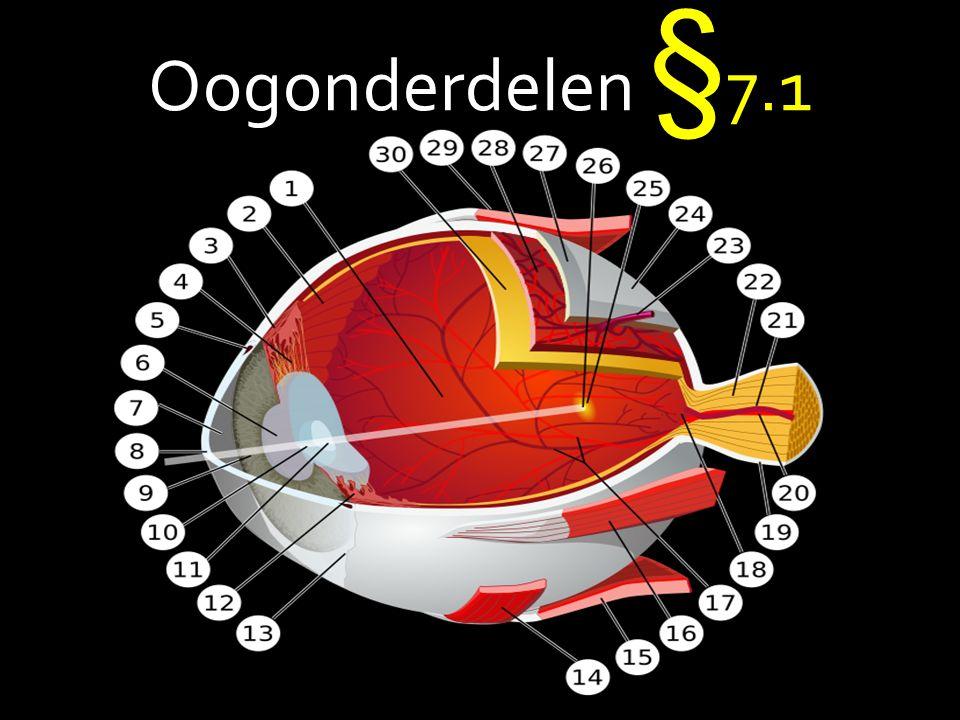 1.Hoornvlies (cornea) 2. Oogwit ( harde oogrok) 3.