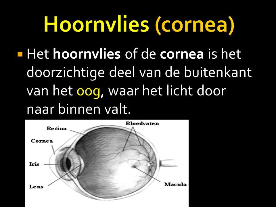 HHet hoornvlies of de cornea is het doorzichtige deel van de buitenkant van het oog, waar het licht door naar binnen valt.