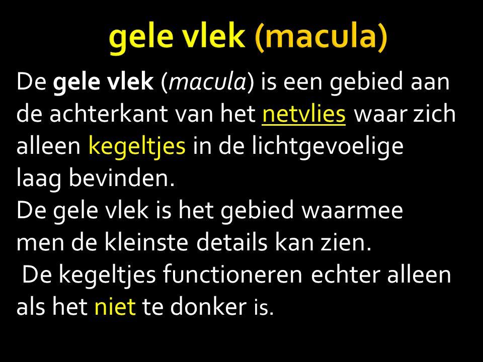 De gele vlek (macula) is een gebied aan de achterkant van het netvlies waar zich alleen kegeltjes in de lichtgevoelige laag bevinden.