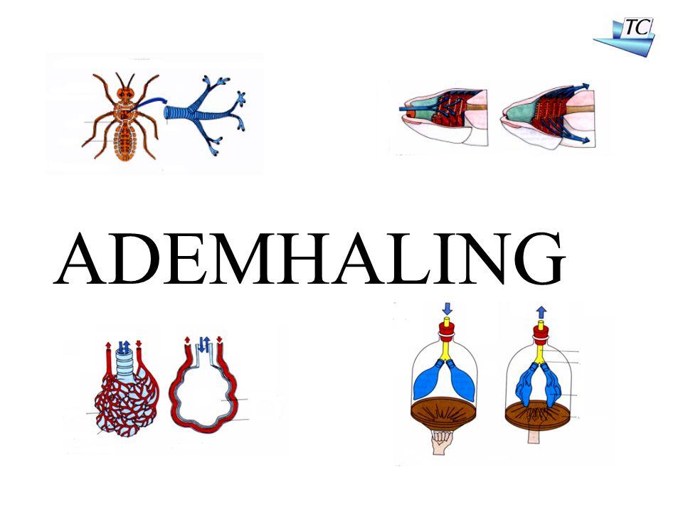 ADEMHALING