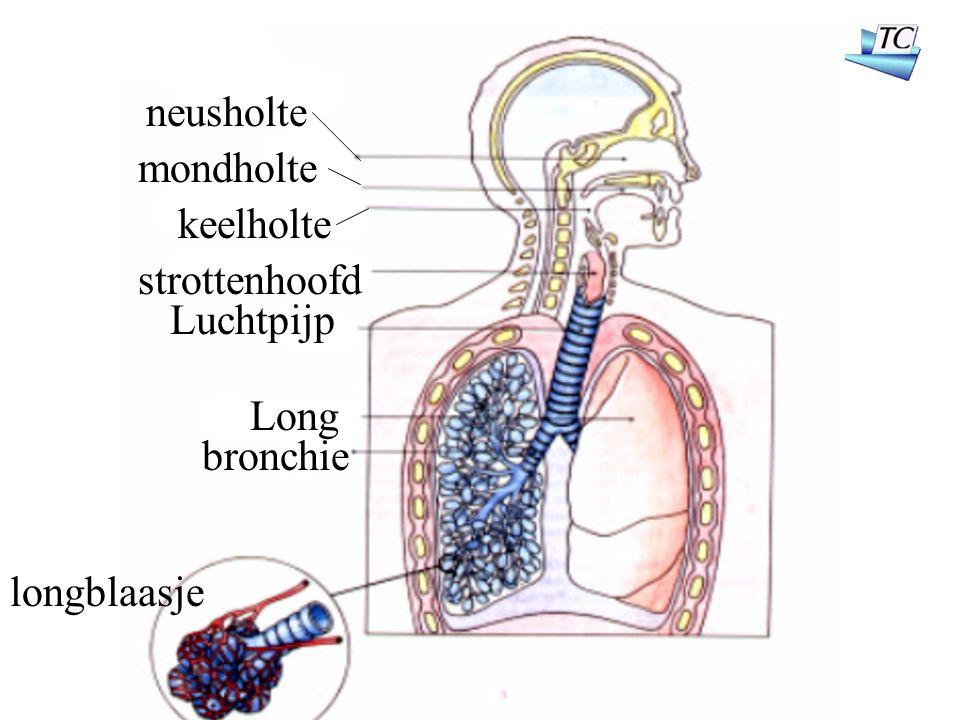 neusholte mondholte keelholte strottenhoofd Luchtpijp Long bronchie longblaasje