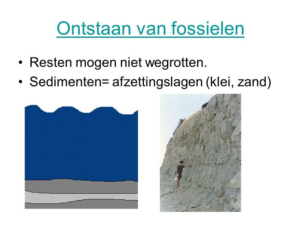 Ontstaan van fossielen Resten mogen niet wegrotten. Sedimenten= afzettingslagen (klei, zand)
