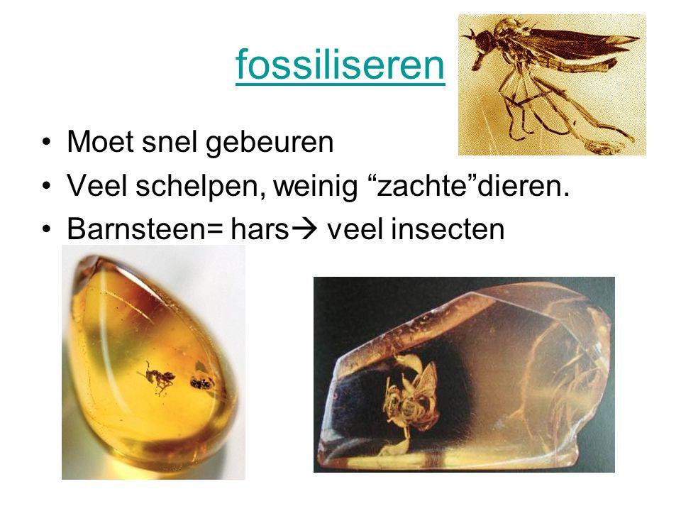 fossiliseren Moet snel gebeuren Veel schelpen, weinig zachte dieren.