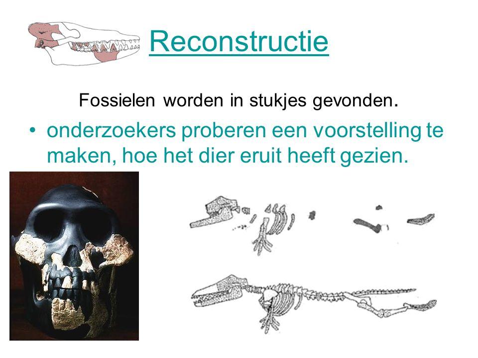 Reconstructie Fossielen worden in stukjes gevonden.
