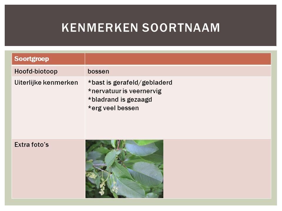 Noorse Esdoorn