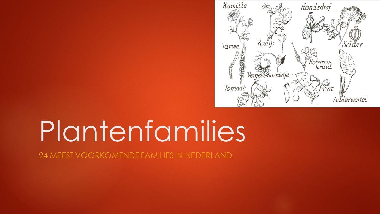 Plantenfamilies 24 MEEST VOORKOMENDE FAMILIES IN NEDERLAND