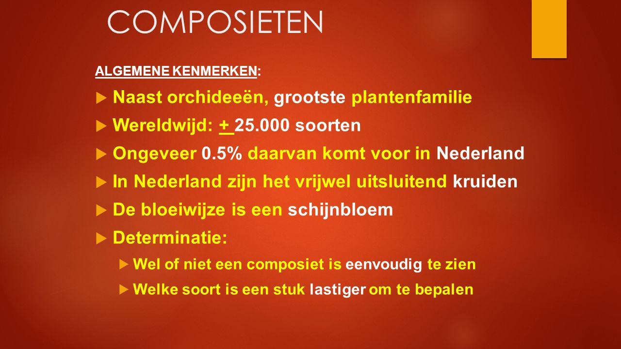 COMPOSIETEN ALGEMENE KENMERKEN:  Naast orchideeën, grootste plantenfamilie  Wereldwijd: + 25.000 soorten  Ongeveer 0.5% daarvan komt voor in Nederl