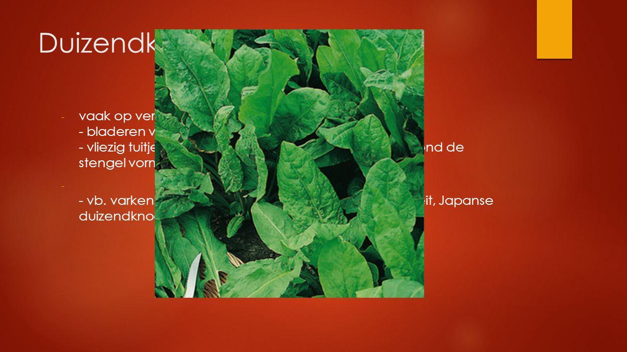 Duizendknoopfamilie - vaak op verstoorde plaatsen - bladeren verspreid - vliezig tuitje aan de voet van het blad dat een buis rond de stengel vormt -