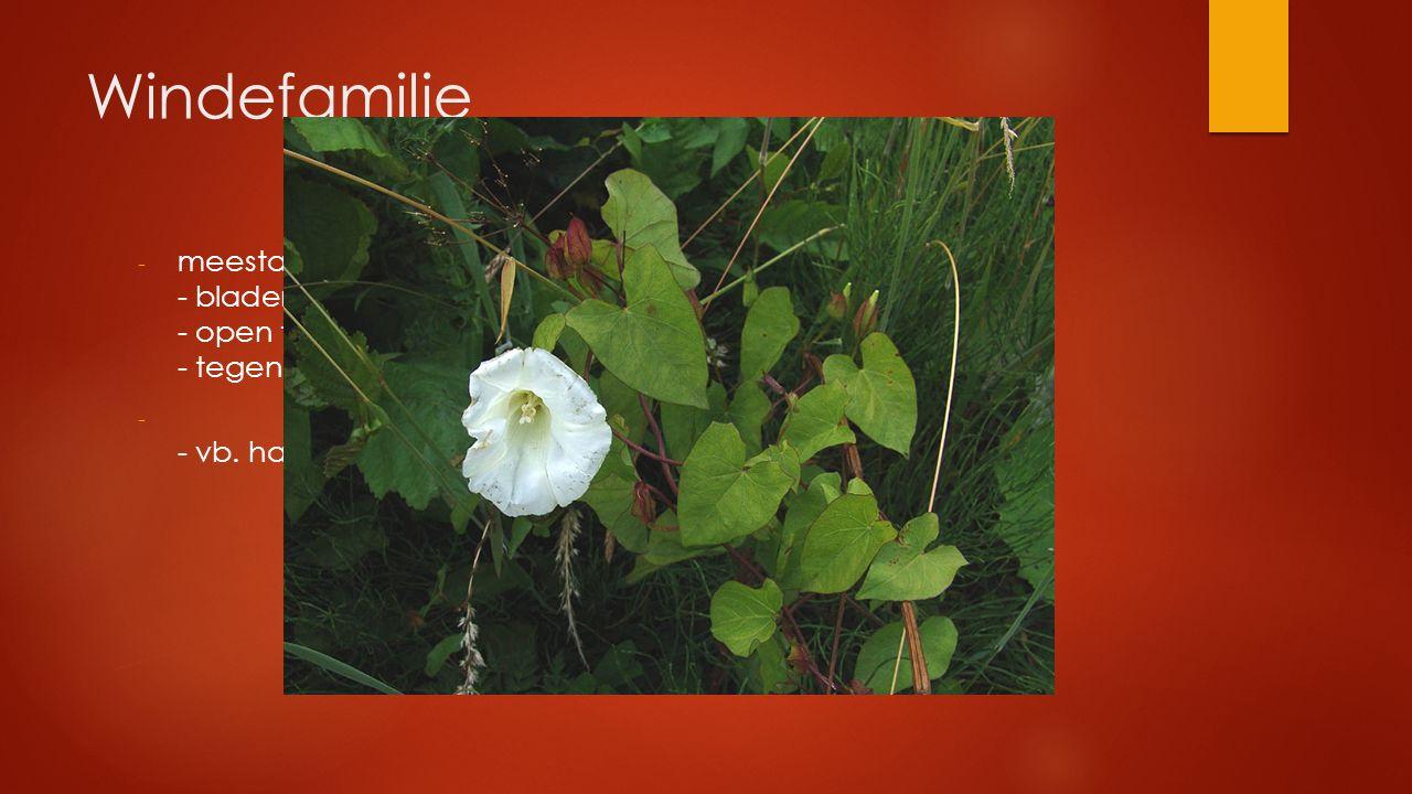 Windefamilie - meestal klimplanten - bladeren verspreid - open trechtervormige bloemen (wit of roos) - tegen de klok inwindend - - vb. haagwinde, akke
