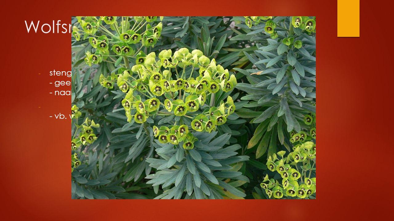 Wolfsmelkfamilie - stengel met melksap - geel/groen - naakte bloemen in schermbloemachtige bloeiwijze - - vb. wolfsmelk, bingelkruid