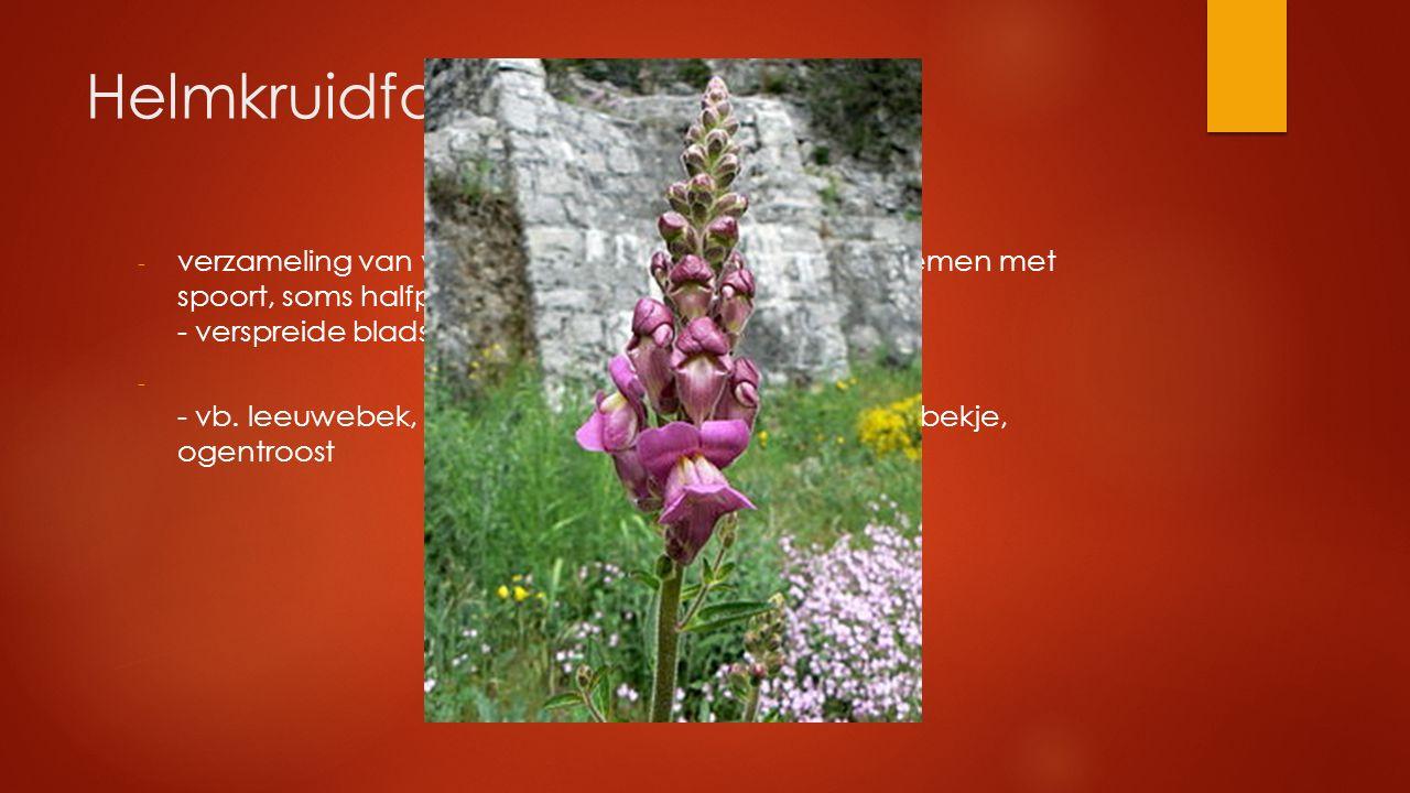 Helmkruidfamilie - verzameling van veel soorten met o.a. 2-lippige bloemen met spoort, soms halfparasieten - verspreide bladstand - - vb. leeuwebek, e