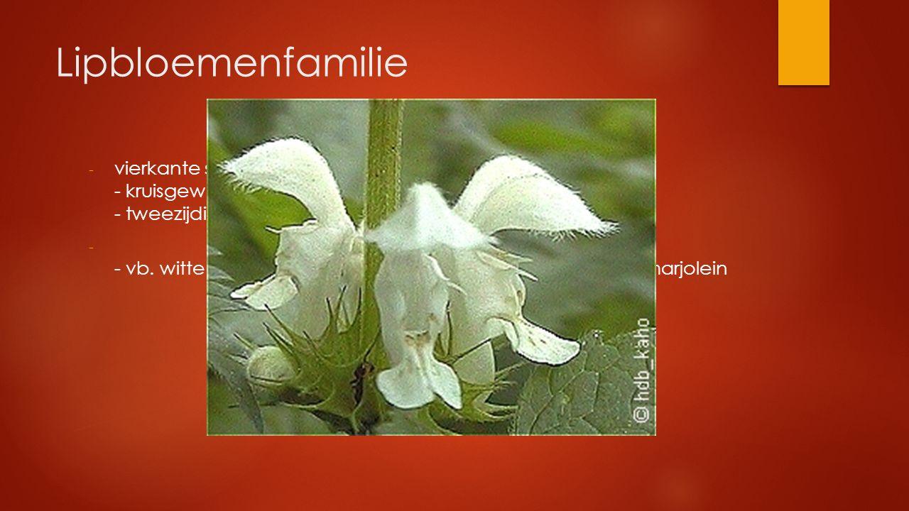 Lipbloemenfamilie - vierkante stengel - kruisgewijs tegenoverst. bladstand - tweezijdige lipbloem met 2 korte en 2 lange meeldraden - - vb. witte dove
