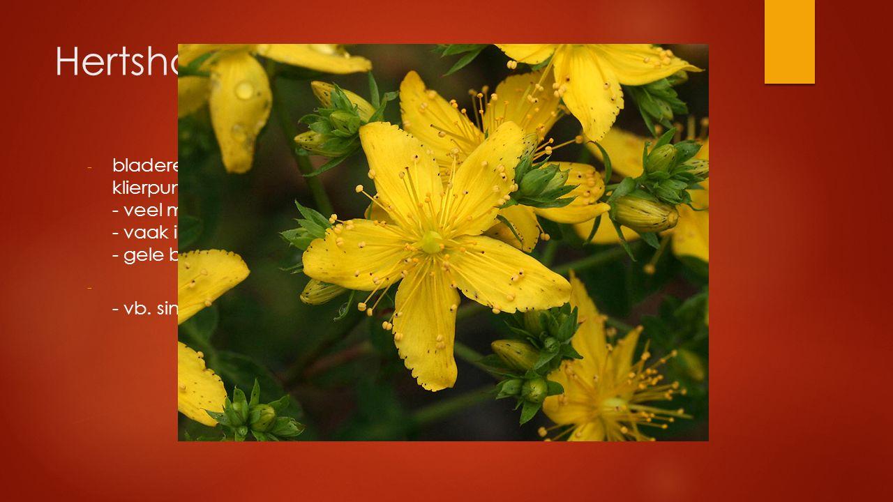 Hertshooifamilie - bladeren tegenoverstaand, gaaf, vaak met doorschijnende klierpuntjes - veel meeldraden - vaak in bundels - gele bloemen - - vb. sin