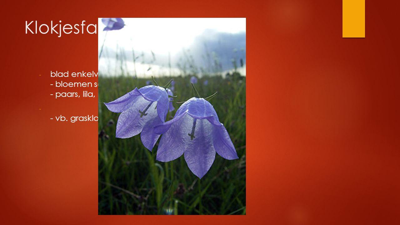 Klokjesfamilie - blad enkelvoudig verspreid - bloemen soms klok- of trechtervormig - paars, lila, roze bloem - - vb. grasklokje, bergklokje