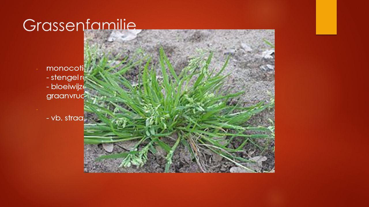 Grassenfamilie - monocotiel : parallelnervig blad - stengel rond vliezig of harrig 'tongetje' - bloeiwijze: aar graanvrucht - - vb. straatgras, maïs,