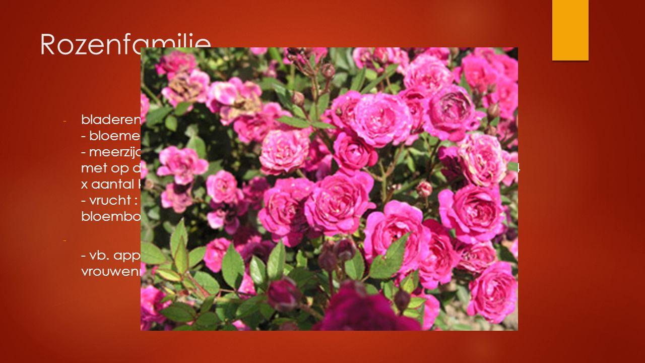 Rozenfamilie - bladeren verspreid, meestal met steunbladeren - bloemen meestal 5-tallig - meerzijdig symmetrisch met brede komvormige bloembodem met o