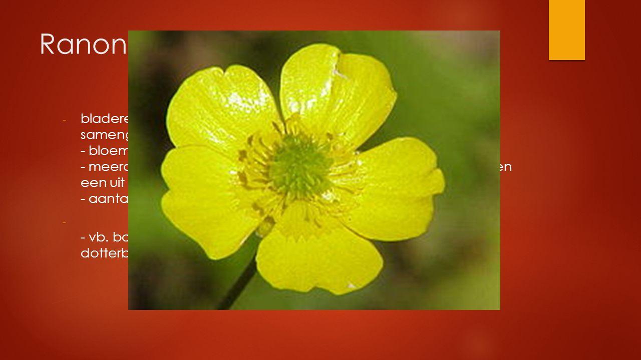 Ranonkelfamilie - bladeren meestal verspreid, vaak handvormig ingesneden of samengesteld - bloemen in grote verscheidenheid van vorm en kleur - meerde