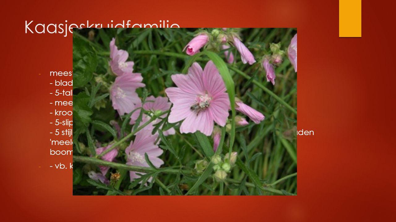 Kaasjeskruidfamilie - meestal behaard - bladeren handvormig, gelobt tot gedeeld - 5-tallige bloem - meerzijdig symmetrisch roos-paars - kroonbladeren