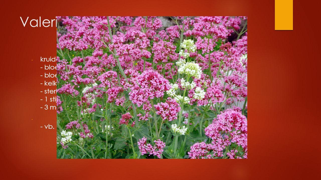 Valeriaanfamilie - kruidachtig met tegenoverstaande bladeren - bloemen ongeveer tweezijdig symmetrisch - bloemkroon met 5 kroonslippen - kelk nauwelij
