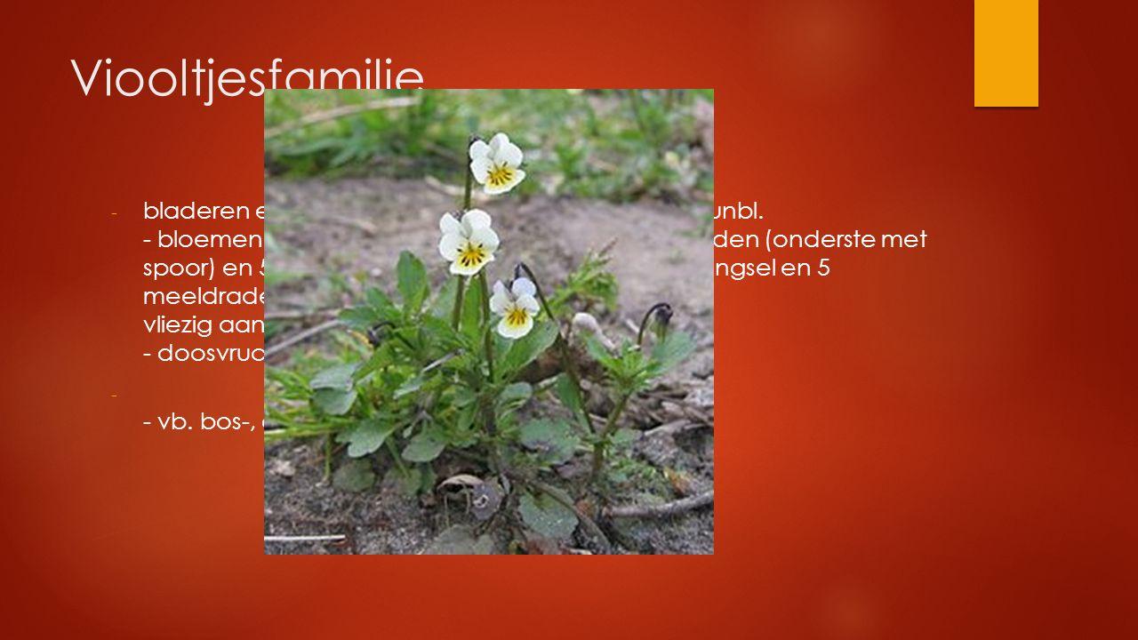 Viooltjesfamilie - bladeren enkelvoudig verspreid gesteeld met steunbl. - bloemen tweezijdig symmetrisch met 5 kroonbladen (onderste met spoor) en 5 k