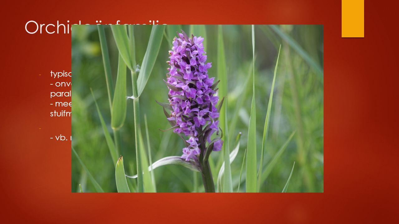 Orchideënfamilie - typisch 2-zijdig symmetrische bloem - onvertakte stengel met verspreide, enkelvoudige, gave parallelnervige stengelomvattende blade