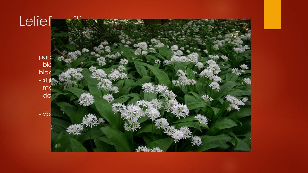 Leliefamilie - parallelnervig blad met bol, knol of wortelstok - bloemdek meerzijdig symmetrisch, zesdelig bloemdekbladeren vrij of deels buisvormig v