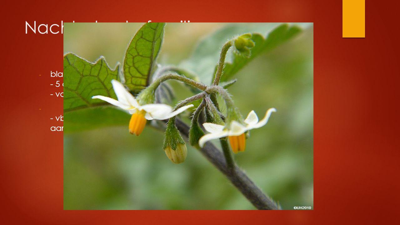 Nachtschade familie - blad gesteeld en verspreid - 5 aan de voet vergroeide kroonbladeren - vaak giftig - - vb. zwarte nachtschade, wolfskers, tabak,