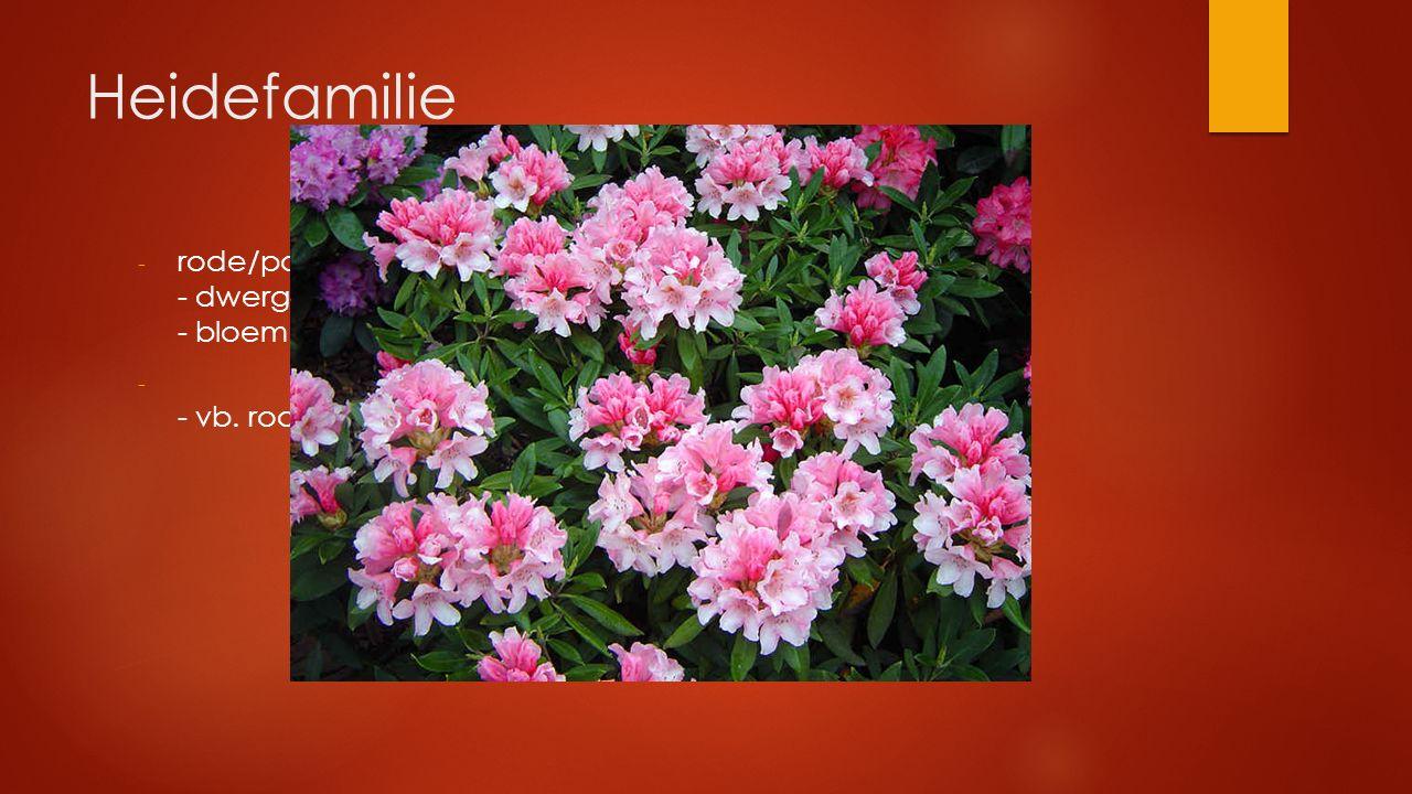 Heidefamilie - rode/paarse bloemen - dwergstruiken met enkelvoudige bladeren - bloem klokvormig vergroeid - - vb. rododendron, bosbes, veenbes, dophei