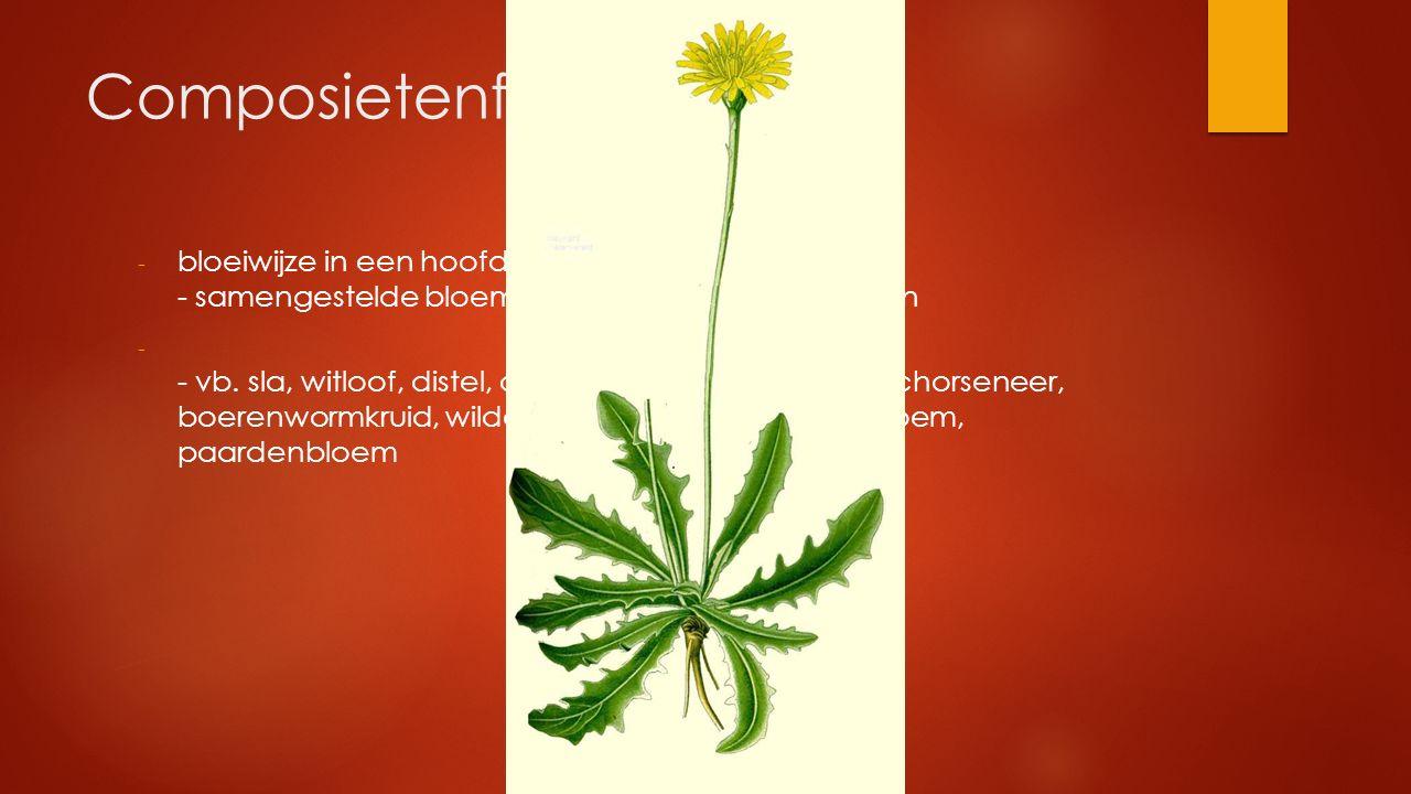 Composietenfamilie - bloeiwijze in een hoofdje - samengestelde bloem met buis- en/of lintbloemen - - vb. sla, witloof, distel, andijvie, biggekruid, a