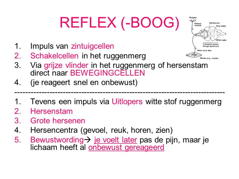 REFLEX (-BOOG) 1.Impuls van zintuigcellen 2.Schakelcellen in het ruggenmerg 3.Via grijze vlinder in het ruggenmerg of hersenstam direct naar BEWEGINGCELLEN 4.(je reageert snel en onbewust) ------------------------------------------------------------------------------- 1.Tevens een impuls via Uitlopers witte stof ruggenmerg 2.Hersenstam 3.Grote hersenen 4.Hersencentra (gevoel, reuk, horen, zien) 5.Bewustwording  je voelt later pas de pijn, maar je lichaam heeft al onbewust gereageerd