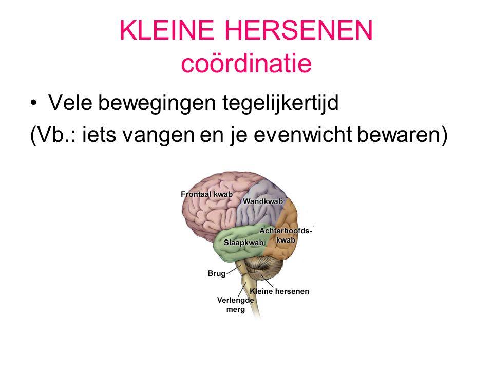 KLEINE HERSENEN coördinatie Vele bewegingen tegelijkertijd (Vb.: iets vangen en je evenwicht bewaren)