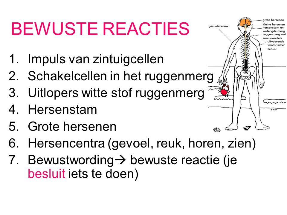 BEWUSTE REACTIES 1.Impuls van zintuigcellen 2.Schakelcellen in het ruggenmerg 3.Uitlopers witte stof ruggenmerg 4.Hersenstam 5.Grote hersenen 6.Hersencentra (gevoel, reuk, horen, zien) 7.Bewustwording  bewuste reactie (je besluit iets te doen)