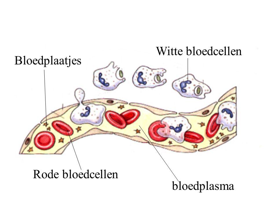 Witte bloedcellen Rode bloedcellen Bloedplaatjes bloedplasma