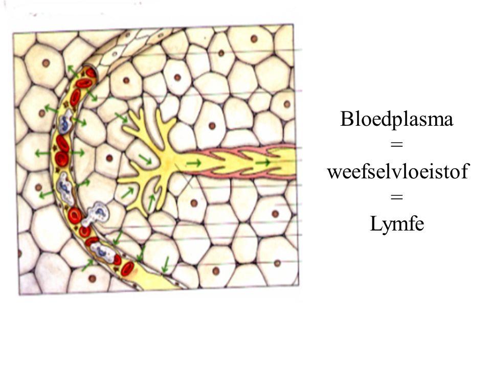 Bloedplasma = weefselvloeistof = Lymfe