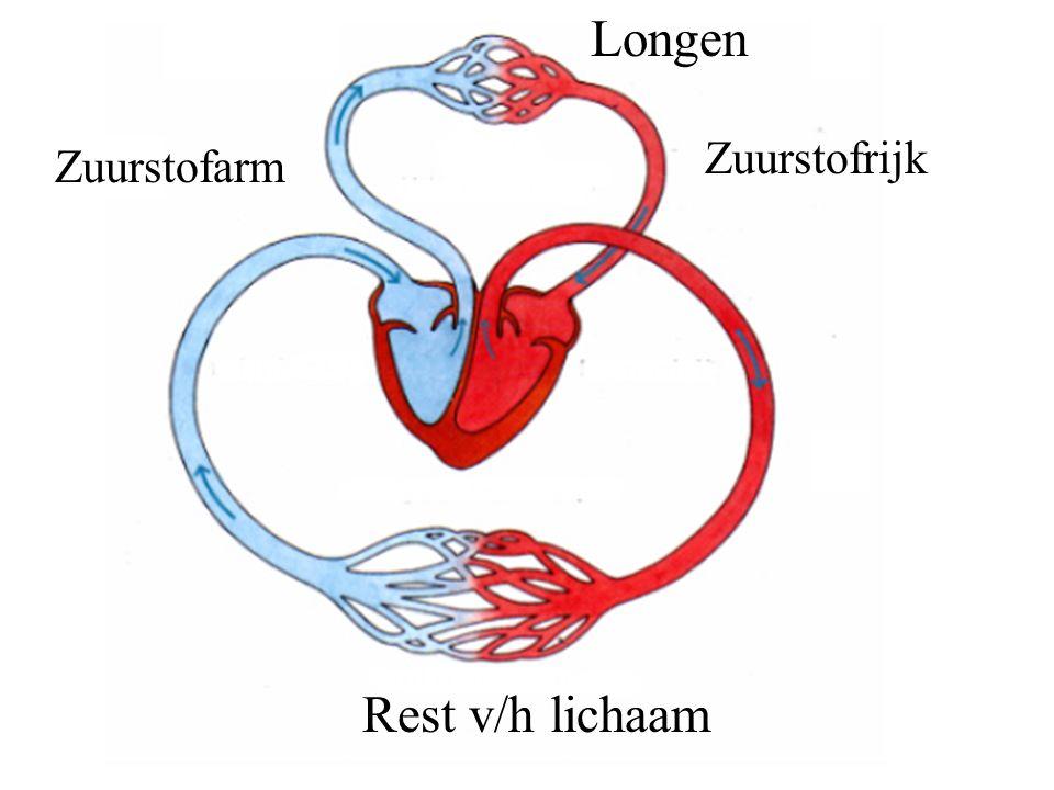 Longen Rest v/h lichaam Zuurstofarm Zuurstofrijk