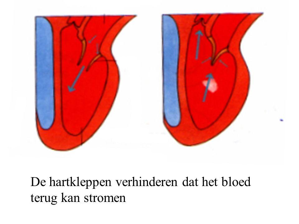 De hartkleppen verhinderen dat het bloed terug kan stromen