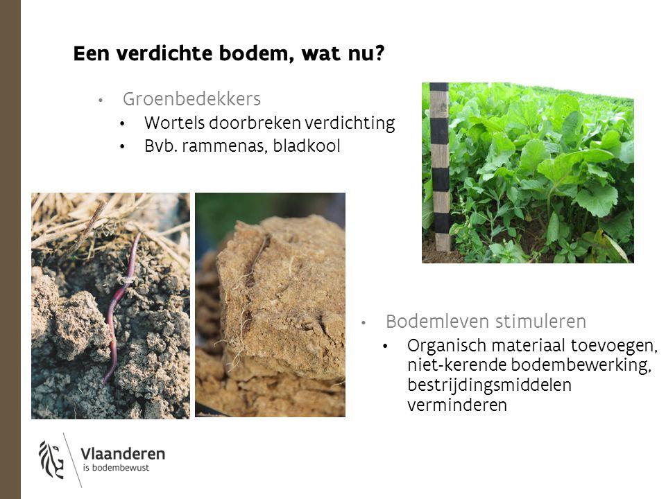 Groenbedekkers Wortels doorbreken verdichting Bvb. rammenas, bladkool Een verdichte bodem, wat nu? Bodemleven stimuleren Organisch materiaal toevoegen