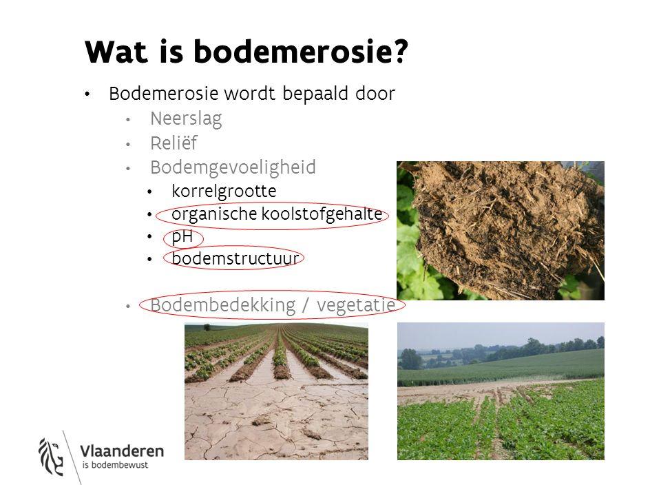 Groenbedekkers Wortels doorbreken verdichting Bvb.