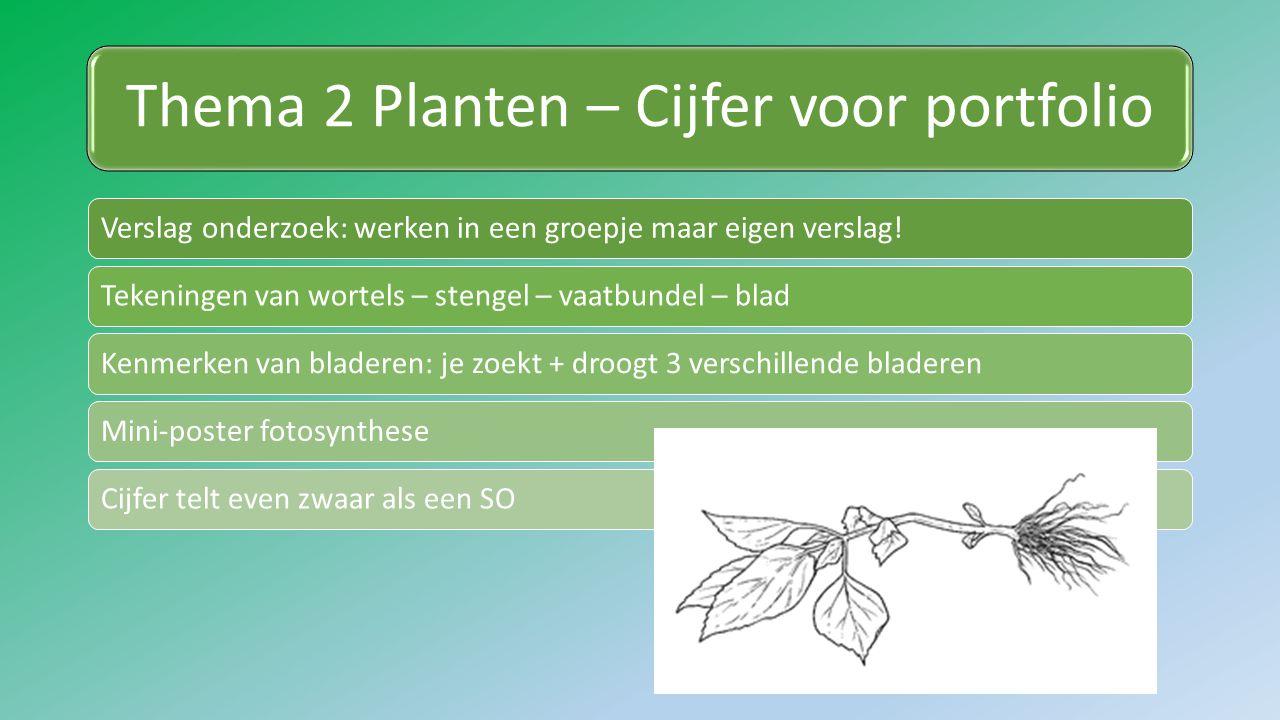 Thema 2 Planten – Cijfer voor portfolio Verslag onderzoek: werken in een groepje maar eigen verslag!Tekeningen van wortels – stengel – vaatbundel – bladKenmerken van bladeren: je zoekt + droogt 3 verschillende bladerenMini-poster fotosyntheseCijfer telt even zwaar als een SO